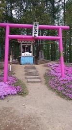 芝桜3.jpgのサムネール画像